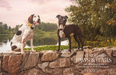 Paws & Tails Pet Photography
